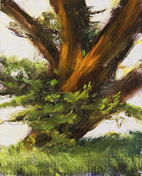 Tree Point Reyes Painting Seamus Berkeley